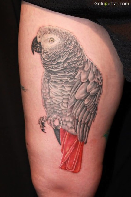 Beautiful Parrot Tattoo With Red Tail