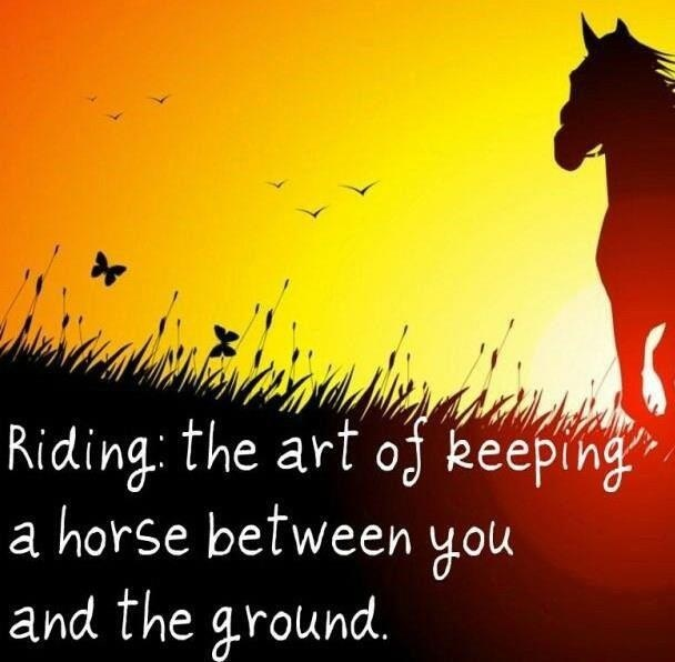 Riding the art of keeping a horse between you and the ground