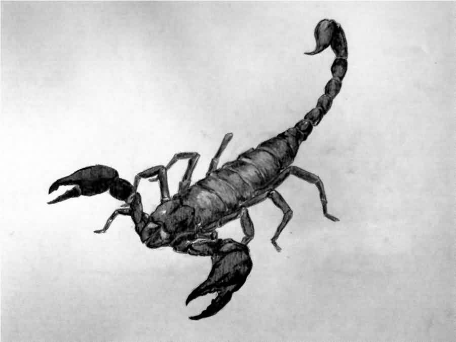 38black scorpio tattoo idea
