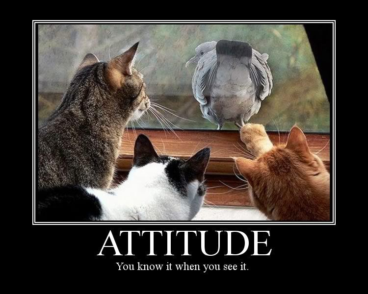 attitude-you-know-it-when-you-see-it-attitude-quote