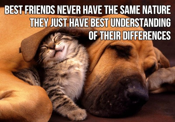 best-friends-never-have-the-same-nature-they-just-have-best-understanding-of-their-differences-friendship-quote