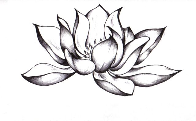 Awesome Black Ink Lotus Flower Tattoo Design