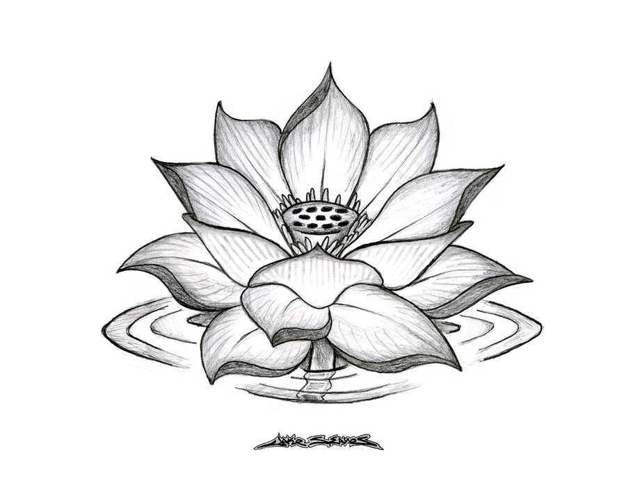 Cool Black And Grey Lotus Flower Tattoo Design