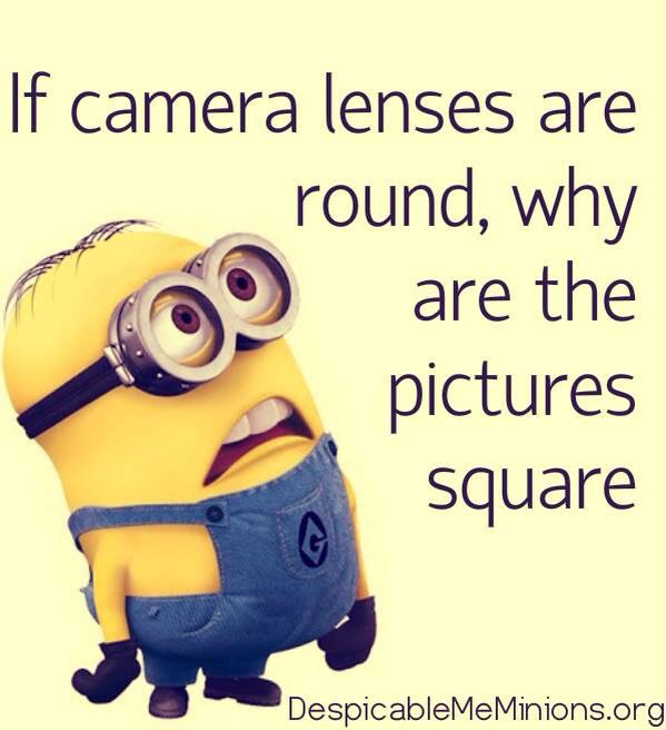 Cool funny minion memes pictures - 9897977462