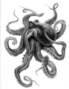 wonderful stensil of octopus tattoos to get new concept